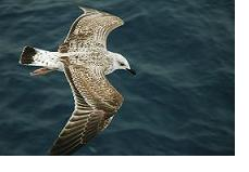bigstockphoto albatross flying over the sea 1390432 reducida